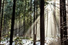 Free Forest In Winter Season Stock Photos - 35278753