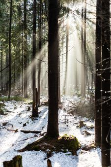 Free Forest In Winter Season Royalty Free Stock Images - 35278799