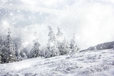 Free Christmas Background With Snowy Fir Trees Stock Image - 35282431