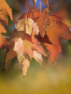 Free Autumn Leaves Stock Photos - 35287433