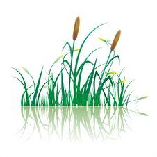 Free Sugar Cane Plantation Royalty Free Stock Image - 35289446