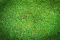Free Green Moss Background Royalty Free Stock Images - 35290799