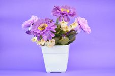 Free Purple Flower In Pot Stock Image - 35290541