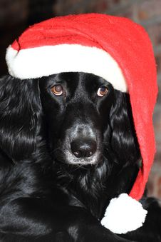 Free Christmas Dog With Red And White Santa Hat Stock Photos - 35290643