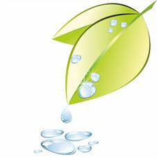 Free Green Leaf With Water Drop  On White Background  Water On White Stock Photos - 35290823