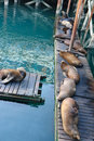 Free Napping Seals Stock Images - 3532804