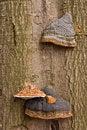 Free Mushrooms Royalty Free Stock Image - 3538986