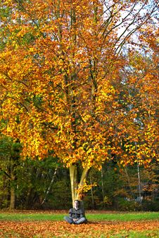 Free Autumn Tree Colors Stock Images - 3531134