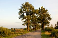 Free Trees On The Road Royalty Free Stock Photos - 3533328