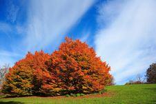 Free Autumn Tree Royalty Free Stock Image - 3533386