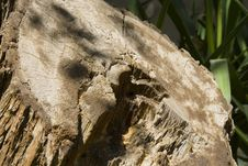 Cut Tree Trunk - Save Trees Stock Photo