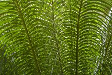 Free Abstract: Green Leaves Stock Photos - 3533473