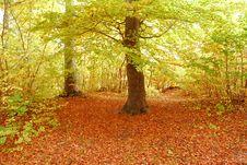 Free Autumn Stock Photos - 3535073