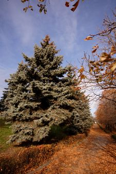 Free Lipetsk Park Royalty Free Stock Image - 3535546