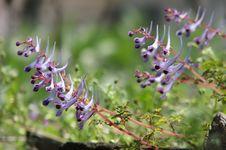 Free Blossom Like Tadpolas Royalty Free Stock Photo - 3536185