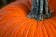 Free Pumpkin Close Up Royalty Free Stock Photo - 3536385