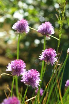 Free Mountain Flowers In Spring Stock Photos - 3536673