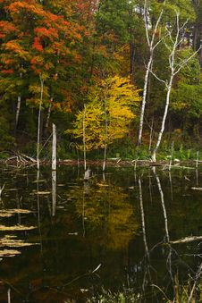 Free Autumn Reflections Royalty Free Stock Image - 3538726