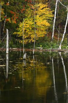 Free Autumn Reflections Royalty Free Stock Images - 3538729