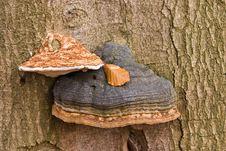 Free Mushrooms Stock Photos - 3538983