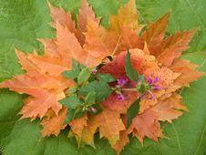 Free Autumn Still Life Stock Images - 3538984