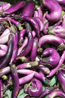 Free Eggplants Stock Photos - 3539023