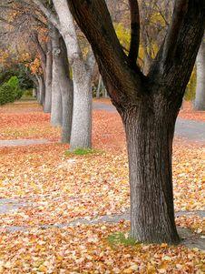 Free Fall Trees Stock Photo - 3539240