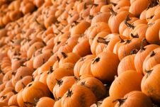 Free Nothing But Pumpkins Royalty Free Stock Images - 3539569