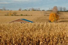 Free Corn Plantation Stock Photo - 3539590