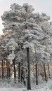 Free Winter Royalty Free Stock Image - 35302666