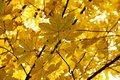 Free Autumn Leaves Stock Photos - 35306303