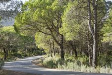 Free Mauntain Road Trees Royalty Free Stock Photo - 35300975