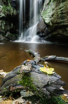 Free Autumn Leaf Frog And Waterfall Royalty Free Stock Image - 35304296