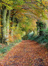 Free Late Autumn In An English Wood Stock Photos - 35324163
