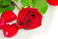 Free Red Roses Royalty Free Stock Photos - 35333558