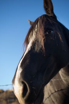 Free Black Horse Face Closeup Stock Image - 35334901