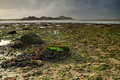 Free Seaweed On A Beach Royalty Free Stock Images - 35347799