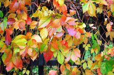 Free Autumn Foliage Fence Stock Photos - 35343383