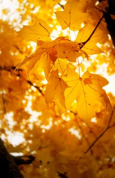 Free Autumn Leaves Stock Images - 35344244