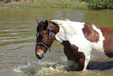 Happy Horse Swimming Royalty Free Stock Images