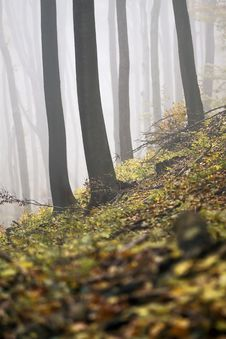 Free Foggy Autumn Forest Stock Images - 35353094