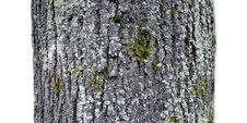Free A Fragment Of Old Tree On A White Background Royalty Free Stock Images - 35357629