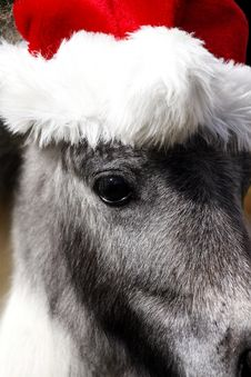Free Miniature Stallion Horse With Christmas Hat Stock Photography - 35358452