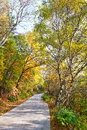 Free The Quiet Forest Path _ Autumnal Scenery Stock Image - 35366951