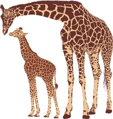 Free Giraffe Mother With Cub Stock Photo - 35364150