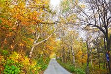 Free The Autumn Woods And Path Royalty Free Stock Images - 35366539
