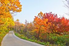 Free The Red Leaves And Winding Path Stock Image - 35366551