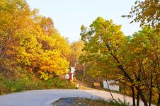 Free The Colorful Forest And Curved Path Royalty Free Stock Photos - 35366588