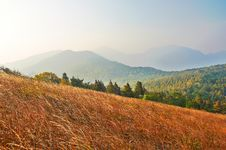 Free The High Mountain Meadow Royalty Free Stock Image - 35366636