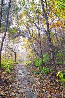 The Fallen Leaves And Gobbet Path _ Autumnal Scene Royalty Free Stock Photo